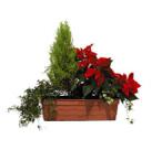 Location de mobilier : location plante GRANDE JARDINIERE